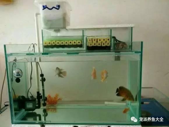 鱼缸过滤系统的原理和安装方法,涨姿势了