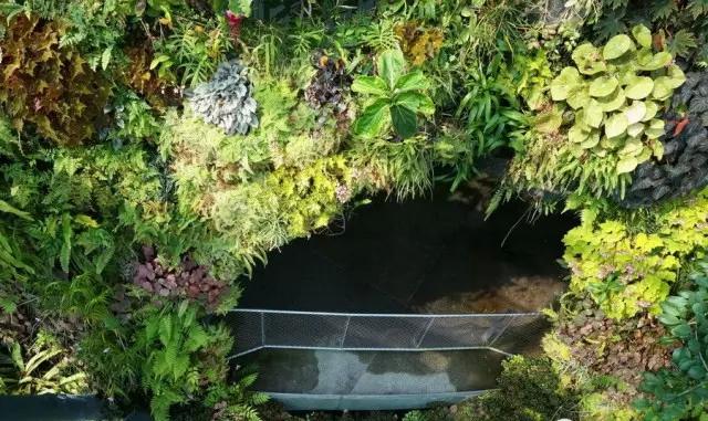 室内绿化温室3