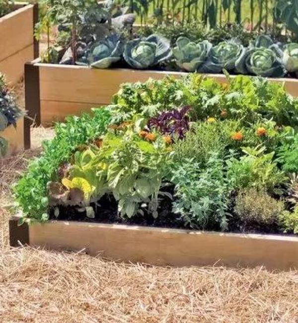 菜园居然比花园还美 到底是怎么做到的