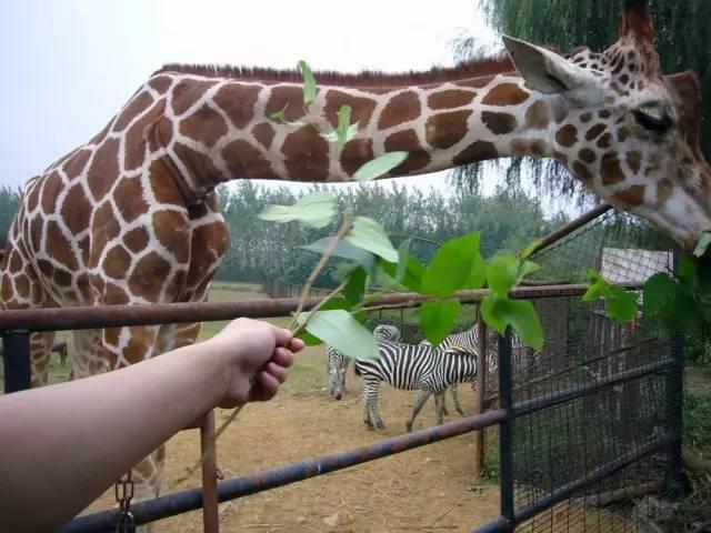 【劳动节·4月29日】杭州野生动物园一日游120元