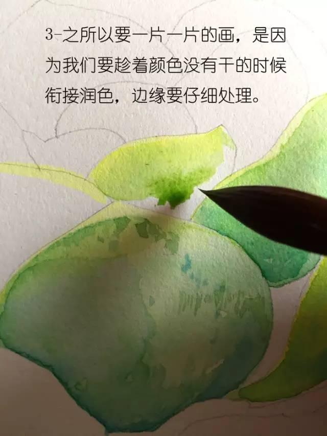 【教程·水彩】教你水彩手绘多肉植物【带视频】