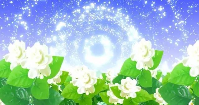 好一朵美丽的 茉莉花 ,十种精彩纷呈演绎