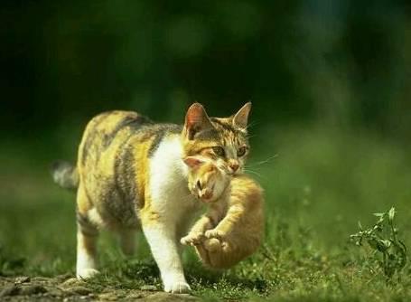 猫咪的瞳孔并没有放大, 心跳速度也没有加快, 呼吸速度也正常——
