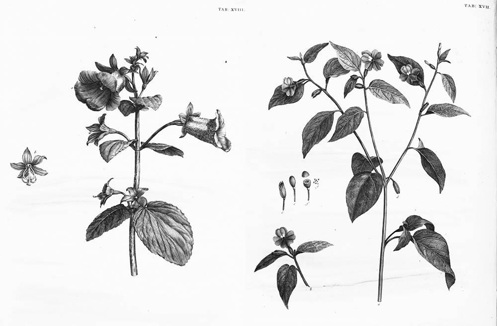 第四期资源:37张植物素描图谱