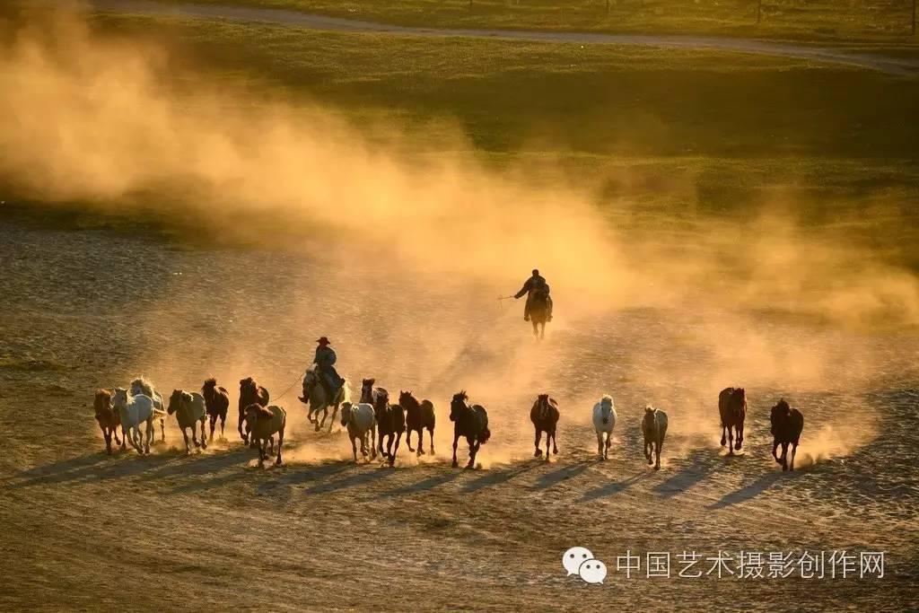 坝上金色白桦 万马奔腾 牛羊牧归 金山岭长城摄影创作培训团火热报图片