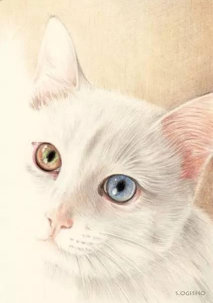 手绘插画 | 她用彩铅画了好多猫