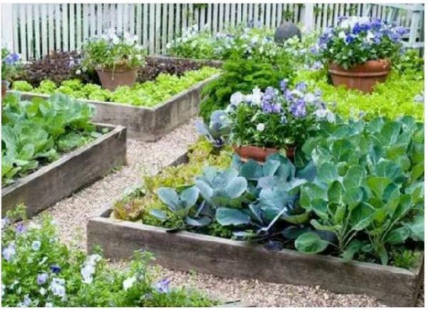 想有这样一个小院,只种菜,图片