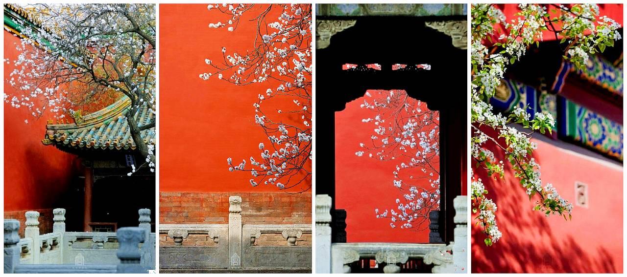 从红宫墙上探出新枝,缀几抹新芽和几多红花,都是故宫里关不住的春色!