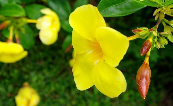 西双版纳,那么美的花,我不愿打扰你的宁静