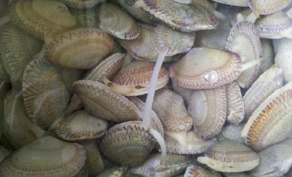 花蛤、花甲、芒果螺做法详解,三种制法尽显美味