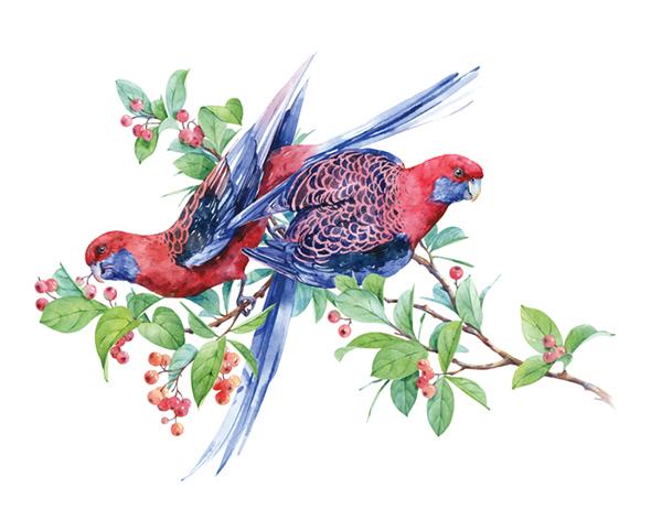 玫瑰夜莺:童话与成人金雕电线和江扬电线图片