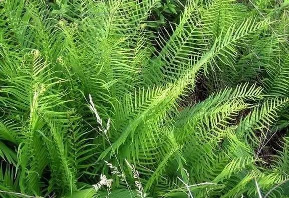 我国南方 北方的主要园林植物图片