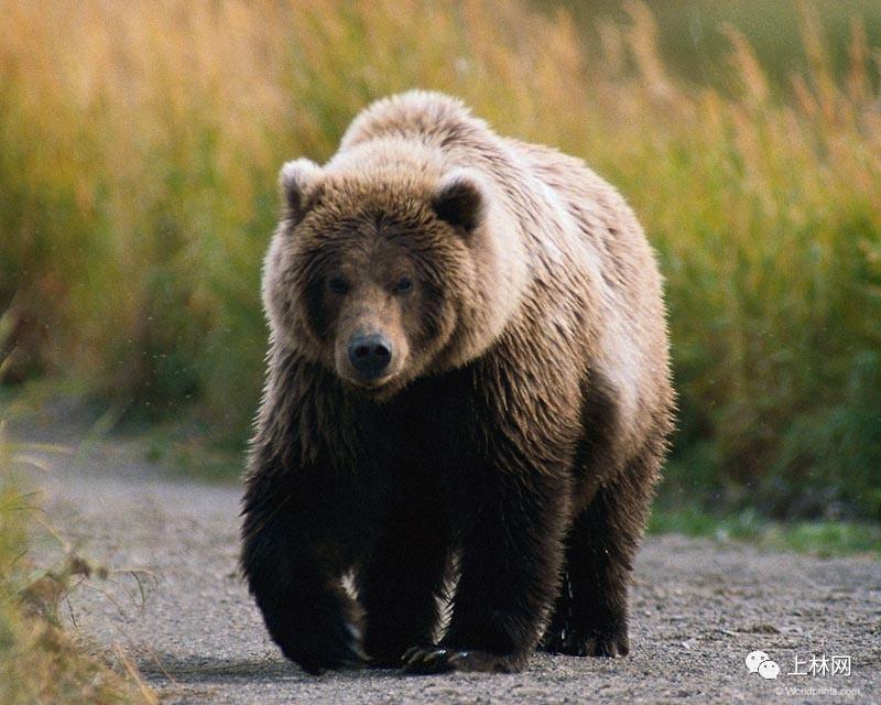 取消极其残忍的活熊取胆,你可以出一份力_水木社区