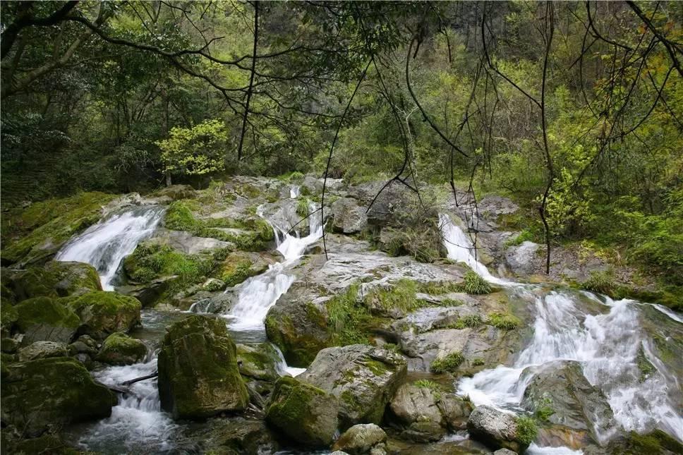古老的原始森林成为自然博