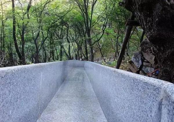 金子山森林滑道