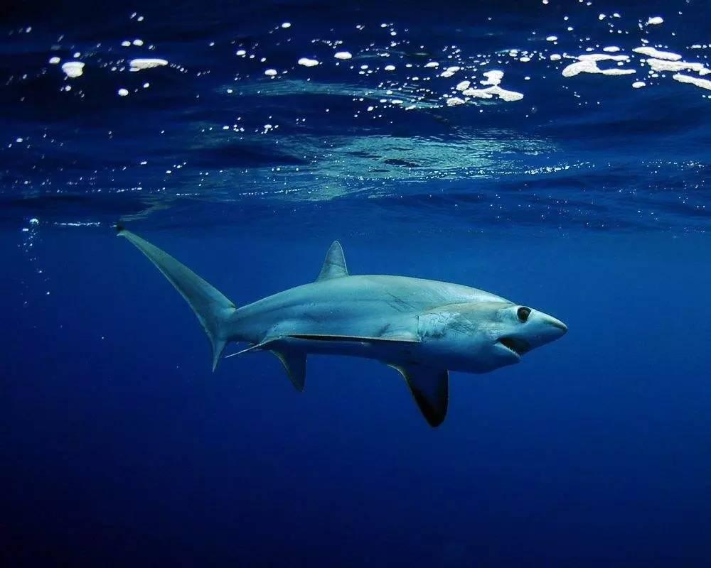 看 十种能让你惊讶到掉眼睛的鲨鱼 搜狐其它 搜狐网