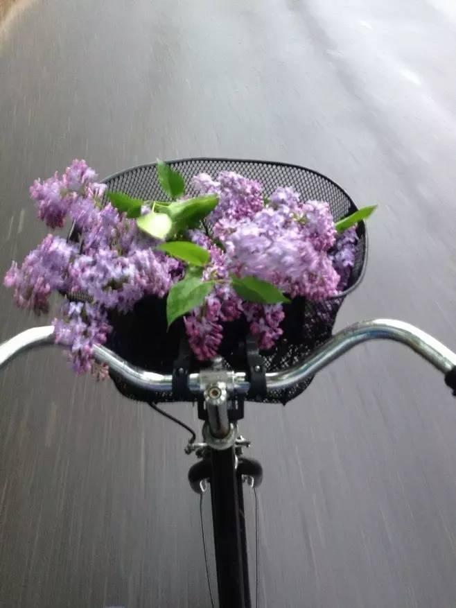 7. 这世界上总有人莫名其妙地出现在你的生活里,手捧着鲜花很认真用力的留下脚印,瓦   解完你的酷与傲,再乘风离去.
