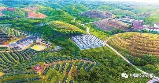 智库丨加大对地方特色农业发展的政策支持