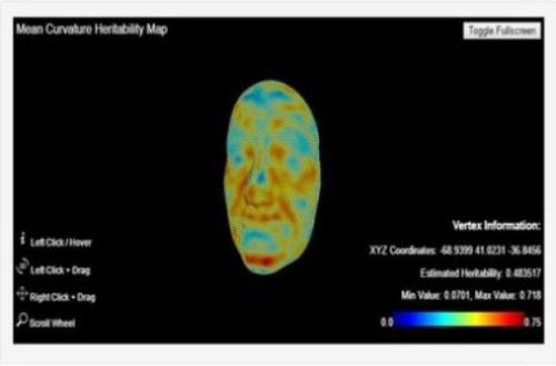 这几个基因决定你脸蛋是否漂亮 - 康斯坦丁 - 科幻星系
