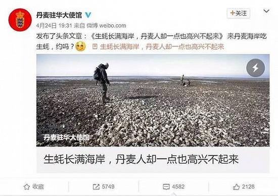丹麦求助中国吃货 丹麦生蚝泛滥