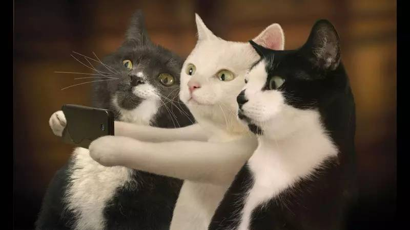 明天有人要在江汉路聚众撸猫!场面快控制不住