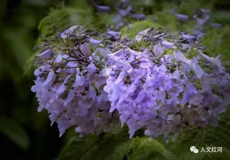 开远 庭前,看花开花落 高清多图