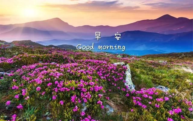 朋友圈早安唯美语录 早安心语图片图片