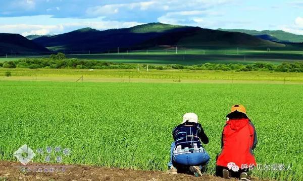 浪漫七月,畅游呼伦贝尔大草原(高端休闲旅游团) - 宁静枫林 - 呼伦贝尔长城摄影旅游俱乐部