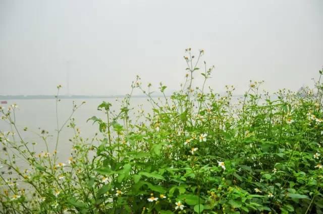 勤劳的小蜜蜂已经出来采蜜啦-这个小岛就在市区,进出只能坐船 却是图片