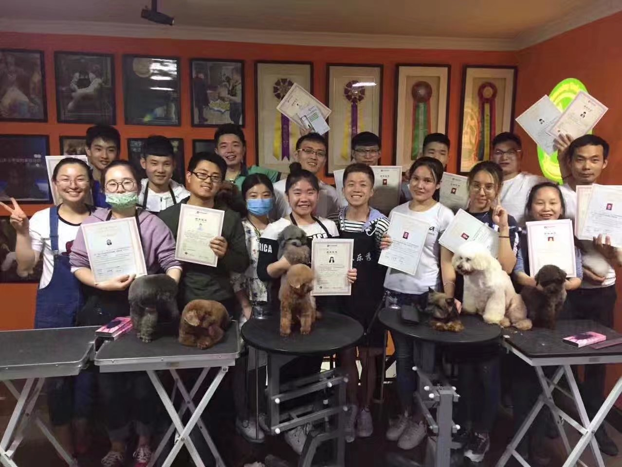 宠物美容培训班好 宠物美容培训学校-尊影宠物美容培训