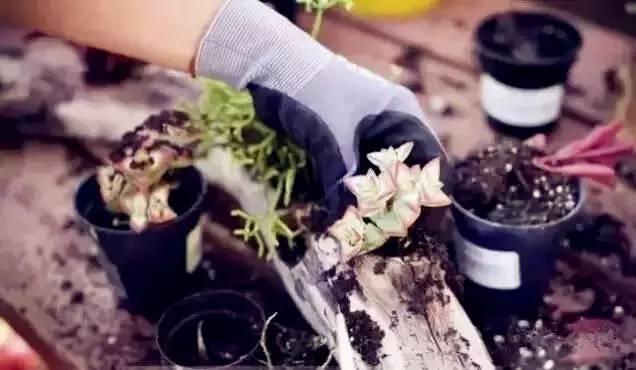 在家自制多肉植物花盆图片