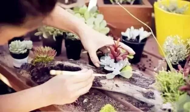 自制diy创意多肉花盆图片