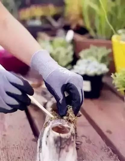 自制创意多肉盆栽花盆图片