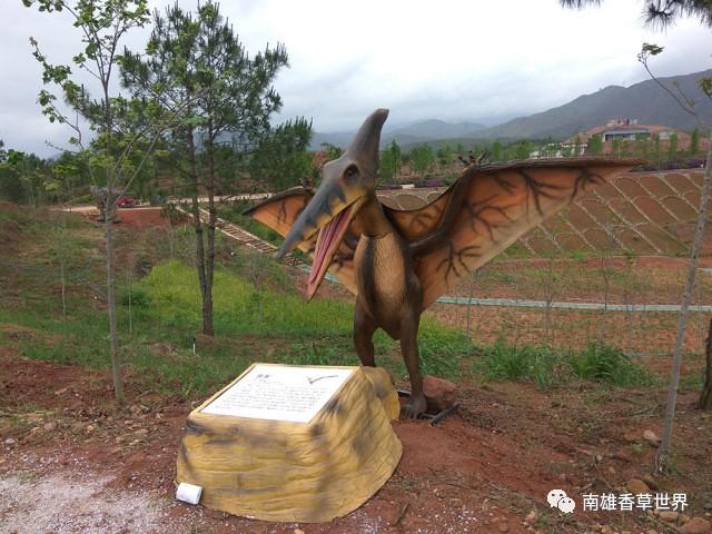 南雄香草世界森林公园5.1-5.5免费游玩啦!图片