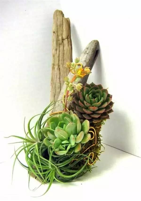 废物改造自制创意花盆图片