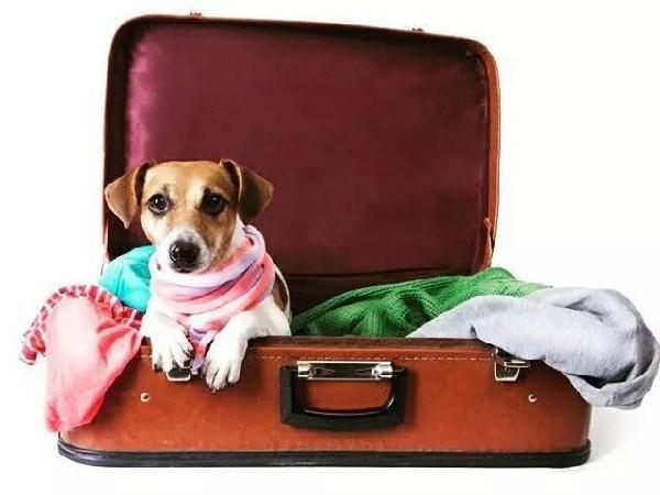萌宠出境指南:猫猫狗狗出国也要办护照和签证么?