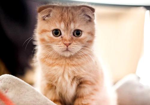 2个月的加菲猫拉肚子怎么办