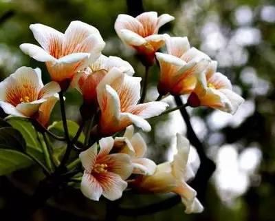 最全花语 118种花,118种爱的含义,你都知道吗