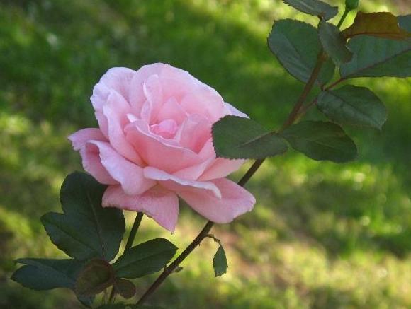 青秀山玫瑰展、摄影大赛浪漫来袭!4招教你拍玫瑰