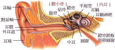 在一定程度上是肾气盛健的一种征象,所以经常进行一些双耳的按摩,可以