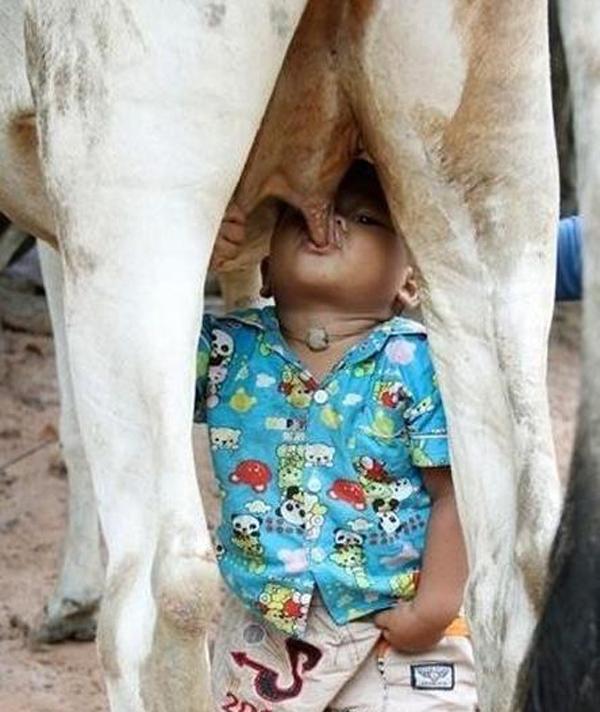太想妈妈,竟直接生喝母牛乳汁,让人看了心碎