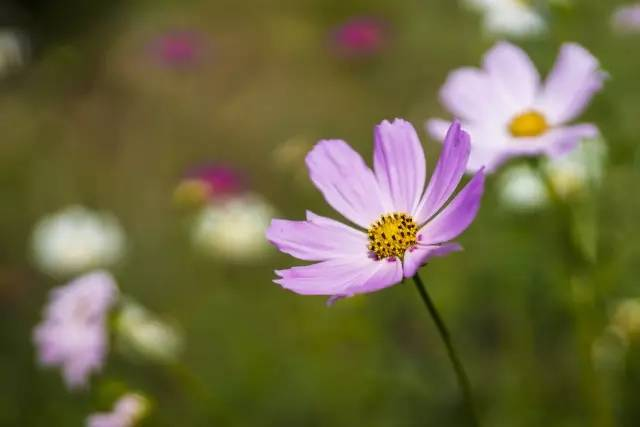 视觉南医 我愿与你,赏花赏景赏四季!
