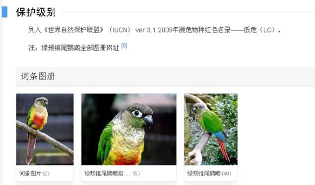 他卖了2只自家养的鹦鹉,竟被判5年!问题出在哪儿?