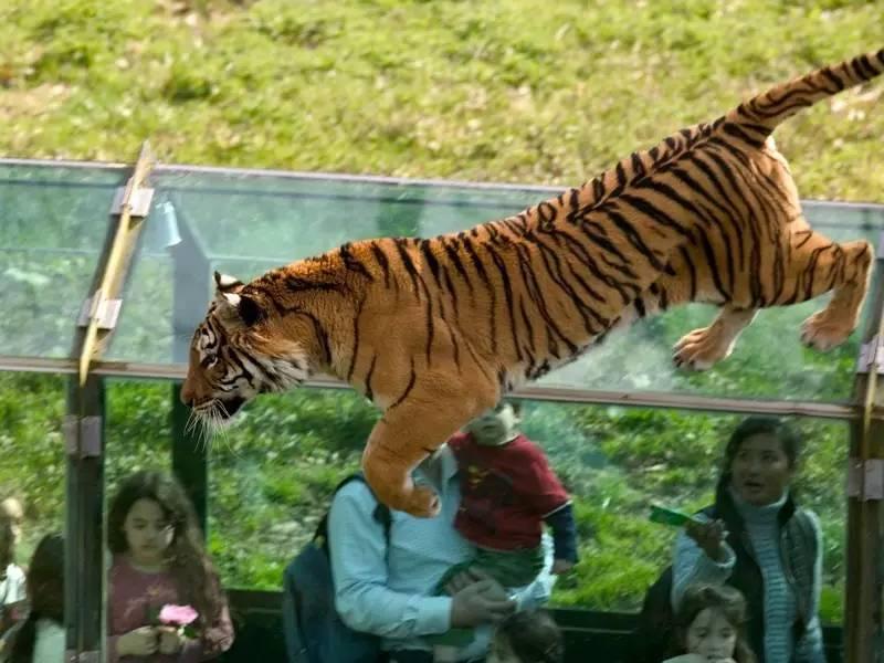 了远古时代.-巴黎动物园大盘点猛兽or萌宠,总有一款是你的菜