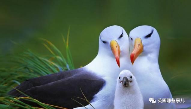 谁说宝宝都萌来着?!这些鸟爸妈倒是颜值担当了,但它们的鸟宝宝…丑啊!