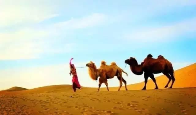 唯美骆驼脸 手绘