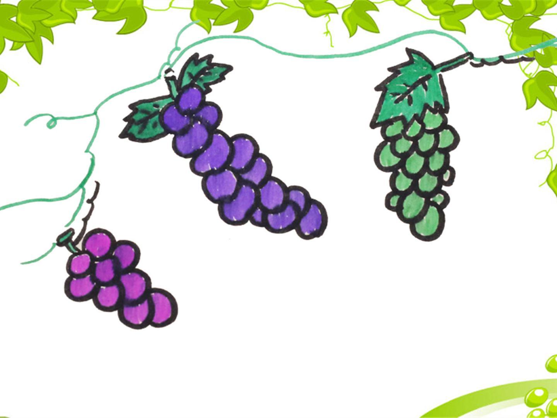 爱的手作日记 简笔画葡萄