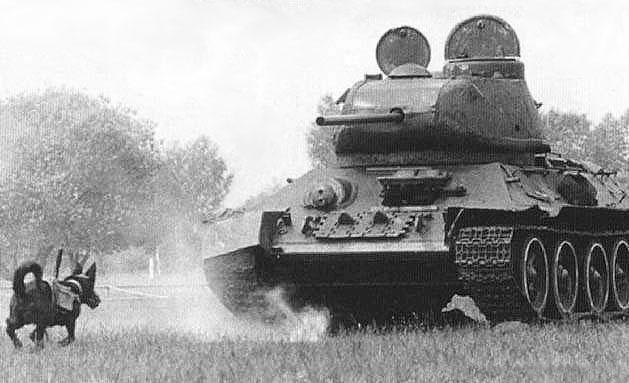 60条狗背上炸药包出击 竟找错目标 炸掉了10辆自己人的坦克 - 龙叔 - 龙山的博客
