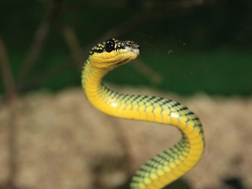 梦见车里有蛇什么预兆