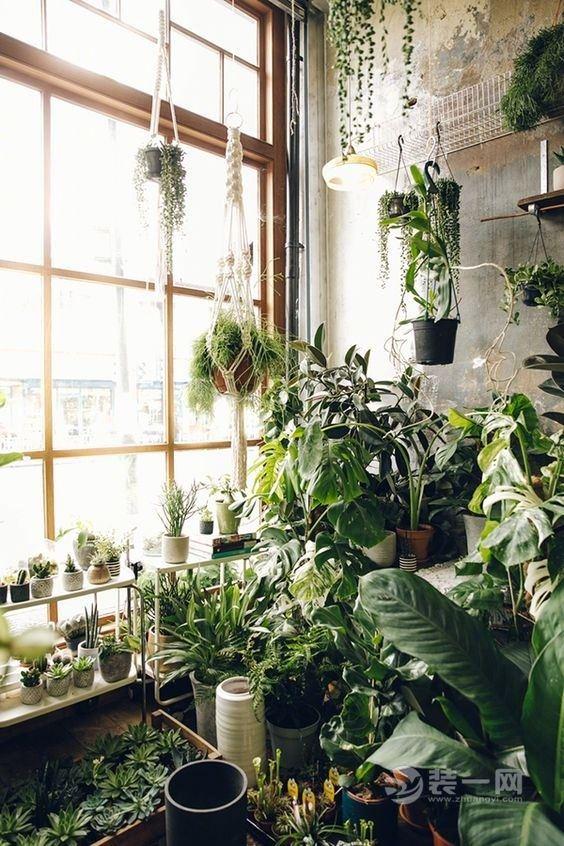 绿意盎然的清新家居 12张室内植物摆放效果图欣赏图片